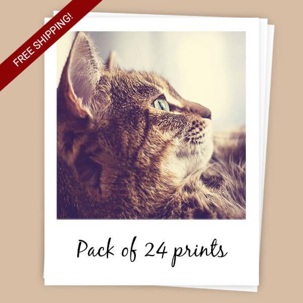 Sticky Polaroids pack of 24
